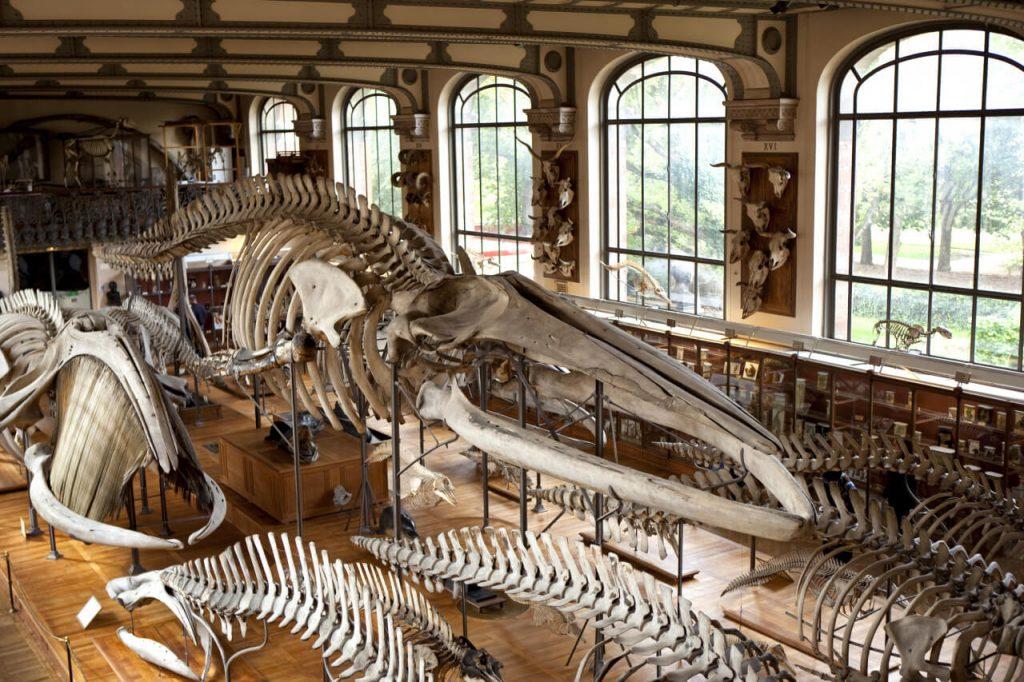 visiter musee histoire naturelle paris